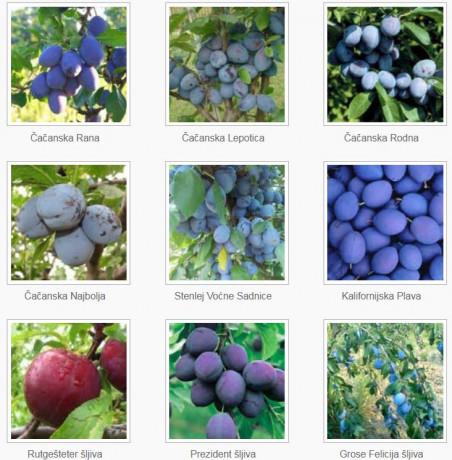 sadnice-voca-za-jesenju-sadnju-rezervacije-u-toku-big-2