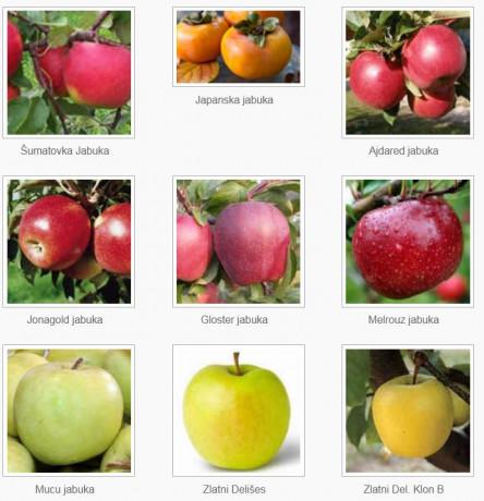 sadnice-voca-za-jesenju-sadnju-rezervacije-u-toku-big-1