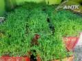 vocne-sadnice-za-jesen-2021-small-2