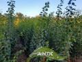 vocne-sadnice-za-jesen-2021-small-1