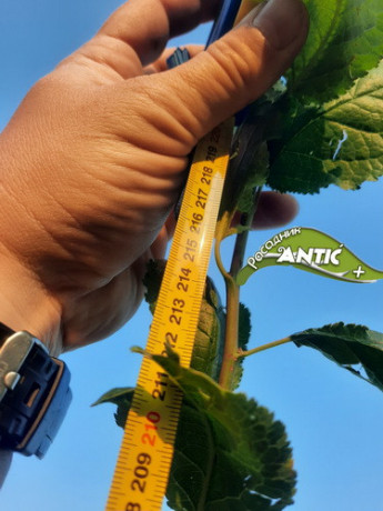 vocne-sadnice-za-jesen-2021-big-0