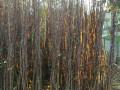 vocne-sadnice-rasadnik-gegic-small-1