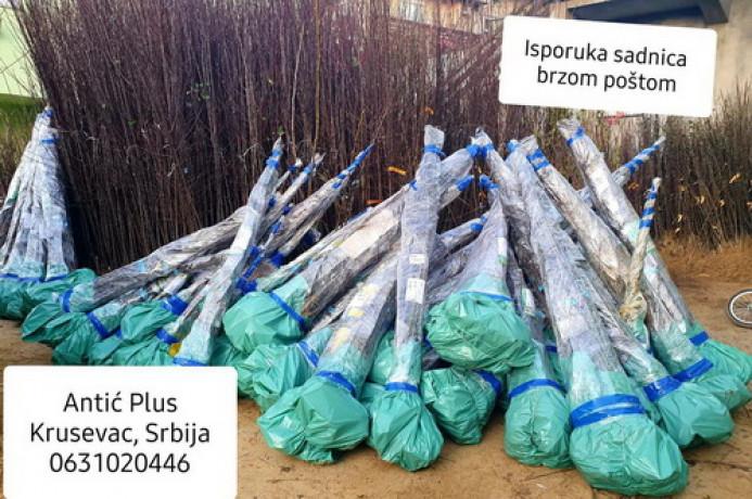 sadnice-lesnika-sljive-tresnje-i-visnje-po-ceni-od-120din-big-2