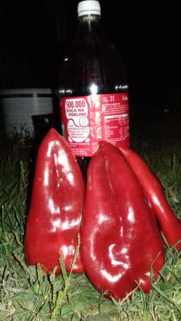 seme-paprike-big-1