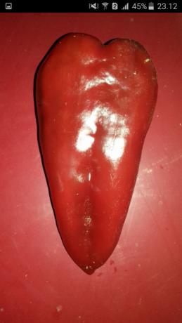 seme-paprike-big-0