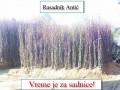kvalitetne-sadnice-voca-za-jesen-2021-small-1