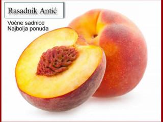Kvalitetne sadnice voća za jesen 2019