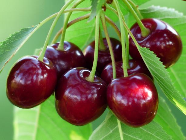 maticni-sok-od-visnje-prirodni-antioksidant-100-voce-big-2