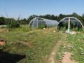 poljoprivredno-gazdinstvo-na-prodaju-popucke-small-4