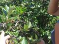 sveza-aronija-i-divlja-borovnica-small-0