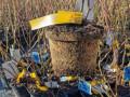 sadnice-borovnice-sertifikovane-small-2
