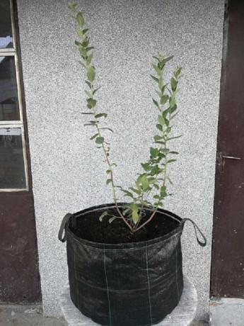 vrece-od-agrotekstila-za-sadnju-borovnice-big-2