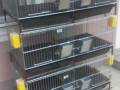 kavezi-za-pilice-i-zeceve-proizvodnja-i-prodaja-small-0