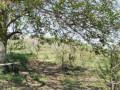 vocnjak-i-vinograd-u-banostoru-fruska-gora-small-1