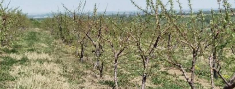 vocnjak-i-vinograd-u-banostoru-fruska-gora-big-0