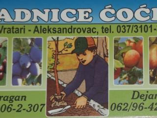Prodaja voćnih sadnica-Rasadnik Ćoćić