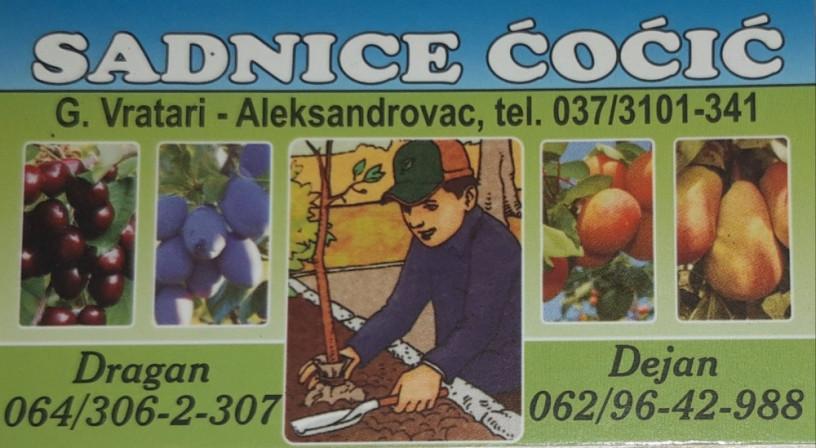 prodaja-vocnih-sadnica-rasadnik-cocic-big-0