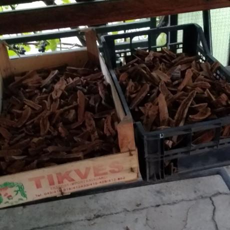 ganoderma-lucidum-reishi-gljiva-hrastova-sjajnica-big-2