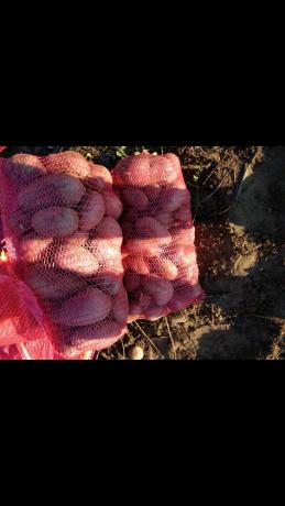 prodaja-krompira-na-veliko-big-0