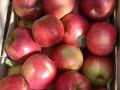 prodaja-jabuka-small-0