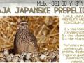 jaja-japanskih-prepelica-oplodjena-small-0