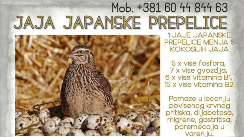 jaja-japanskih-prepelica-oplodjena-big-0