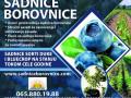 sadnice-borovnice-sertifikovane-dvogodisnje-i-trogodisnje-small-3