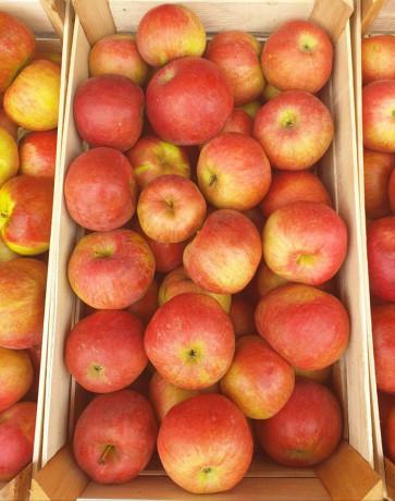 prodaja-jabuka-big-0