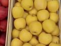 jabuke-crveni-i-zlatni-delises-small-1