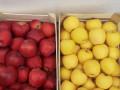 jabuke-crveni-i-zlatni-delises-small-0