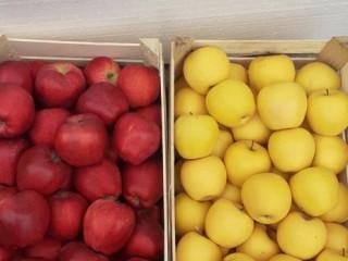 Jabuke Crveni i Zlatni delišes