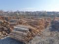 drva-okrajci-okorci-small-3