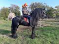 frizijski-konji-small-3