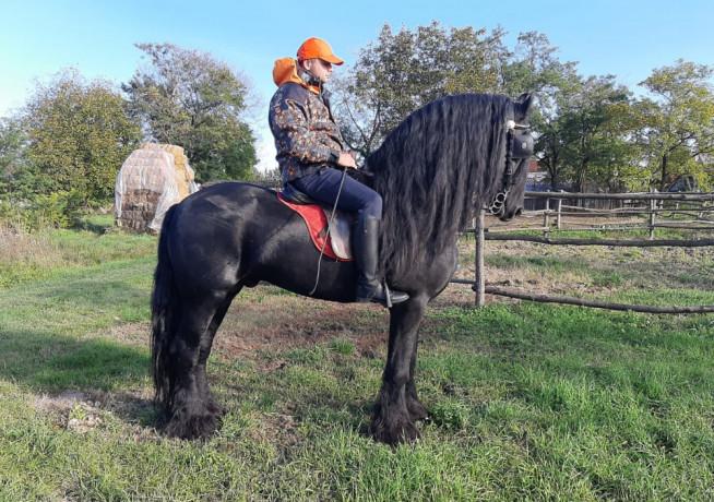 frizijski-konji-big-3