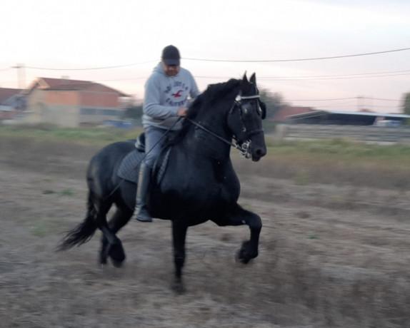 frizijski-konji-big-0