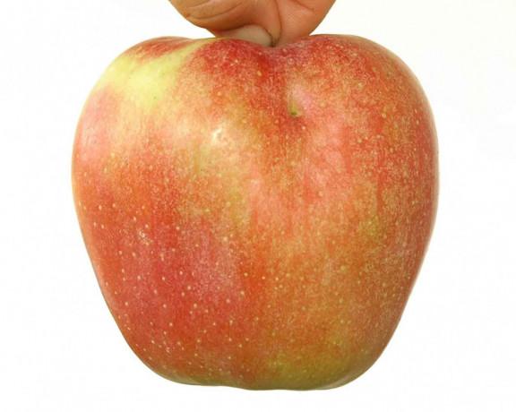 vocne-sadnice-sorte-voca-za-organsku-proizvodnju-big-1