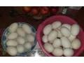 guscija-jaja-od-domacih-belih-gusaka-small-0